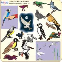 рисунок скачали.  Птицы картинки birds vektor clipart CDR + JPG 11 Мб. раз.