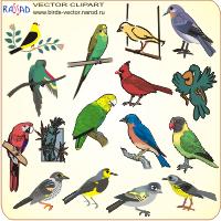 РИСУНКИ ПТИЦ - птицы картинки, перелётные птицы картинки.