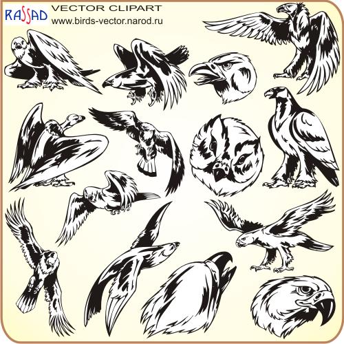 Хищные птицы описание картинки