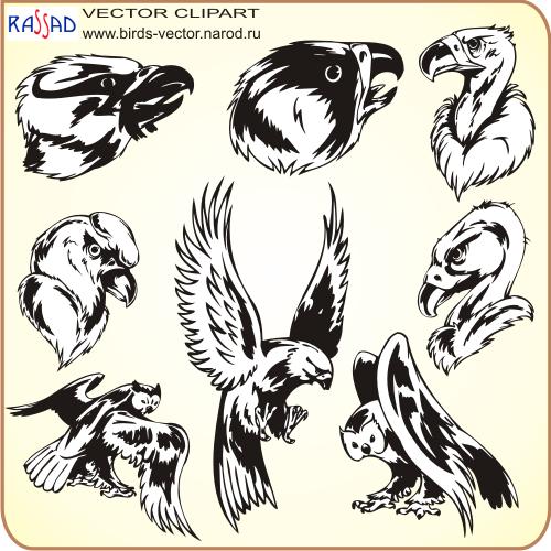 РИСУНКИ ПТИЦ - Картинки птиц для детей, домашняя птица картинки.